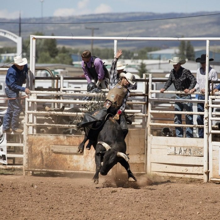 Bull riding rodeo